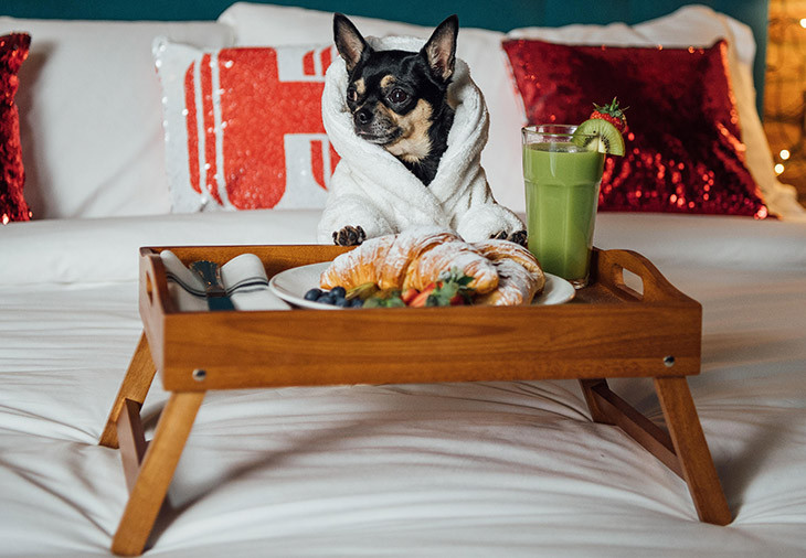 Hotel pet friendly en tepoztlan hoteles en morelos pet friendly