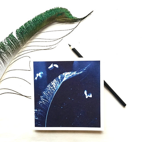 Feather and Flight greeting card. 15cm x 15cm
