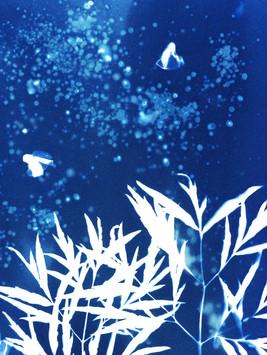 Cyanotype20200907_19592189_0006.jpg