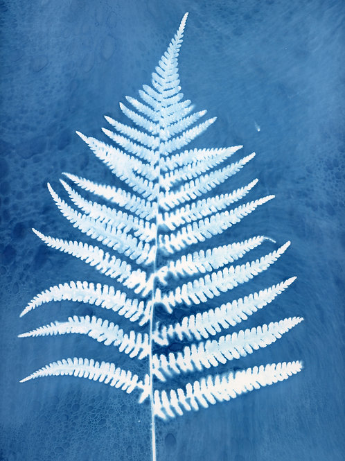 "Large Fern original cyanotype 11"" x 15"""