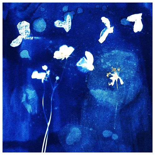 """Flowers in Flight - Limited edition print 12 x 12 """""""