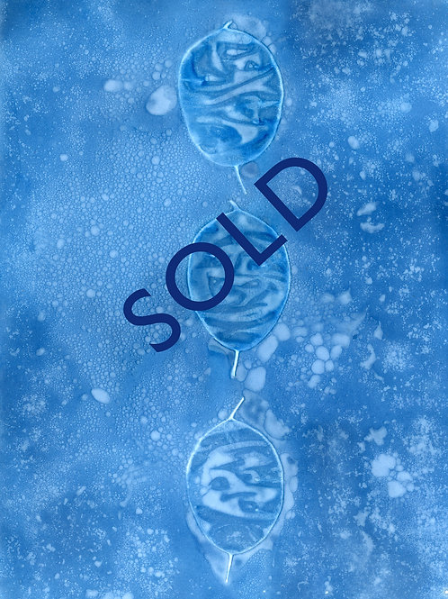 SOLD - Honesty - Original cyanotype print. 5.5 x 7.5 ""