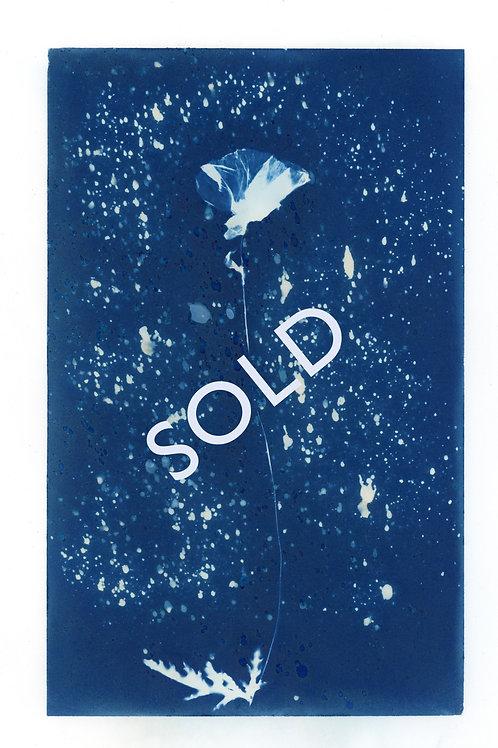 SOLD - Poppy original cyanotype print
