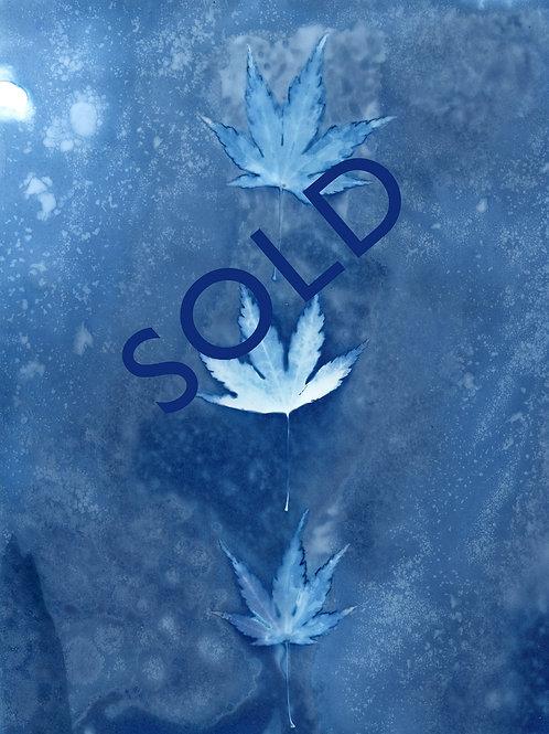 "SOLD - Little Maple - Original cyanotype print. 5.5 x 7.5 """