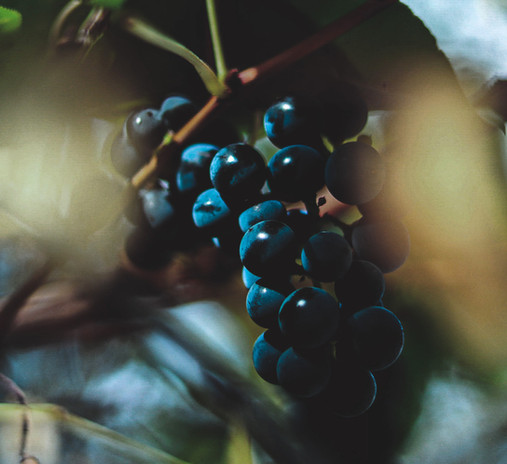 Grapes 2020-2.jpg