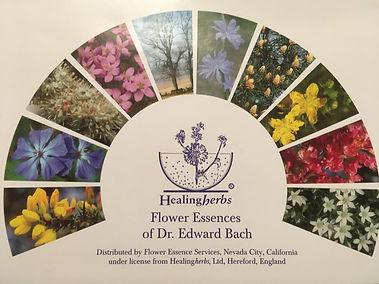 BACH Flower Essences.jpg