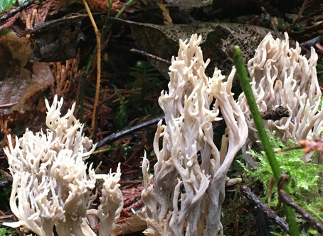 "The Cascades in Winter - ""Naked Comes a Fungus"" loves a Lyrist!"