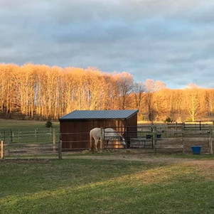Sundog Ranch Equine Retirement