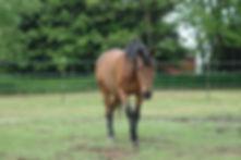 Sundog Ranch Equine Retirement