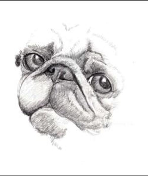 Initial sketches of Bertie