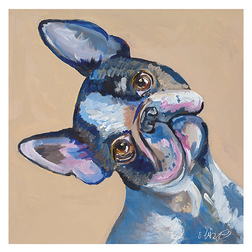 'Alice' Boston Terrier 'blank inside' greetings card