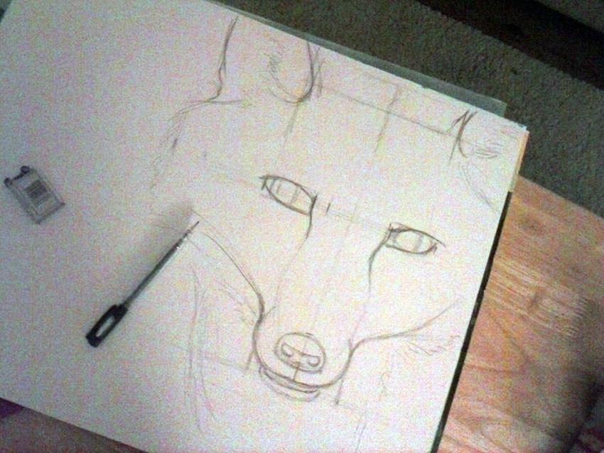 fox-sketch