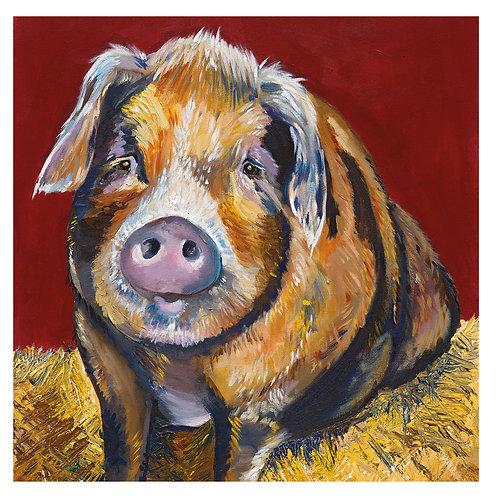 'Betsy' Pig, 'blank inside' greetings card