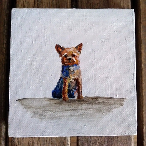 YorkshireTerrier mini canvas - one only