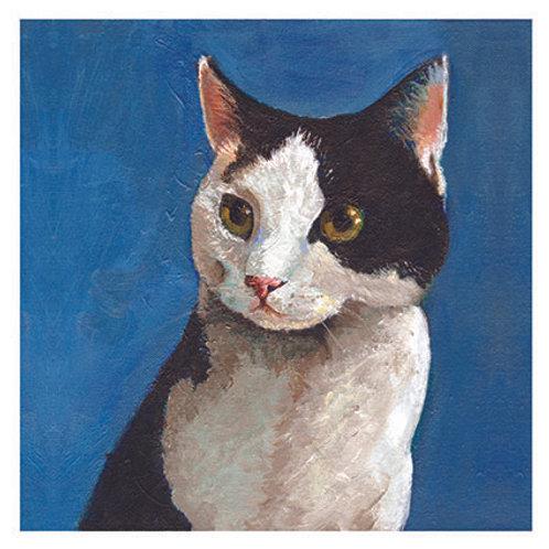 'Hamish' cat, 'blank inside' greetings card