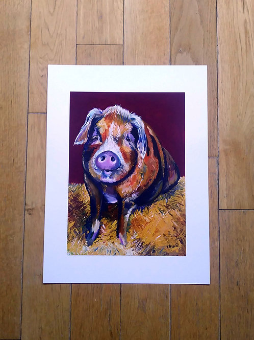 Betsy - Pig A3 Digital Print