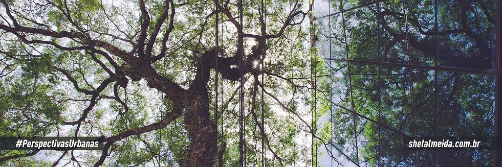 Link para segunda galeria, foto de uma árvore vista de baixo, com seus galhos retorcidos e refletida em janelas espelhadas no canto direito.