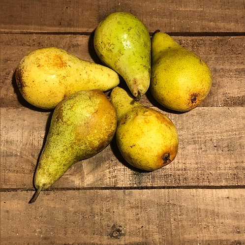 Conference Pears 4 pack