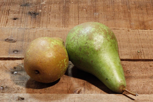 Concord Pears (per 4 pack)