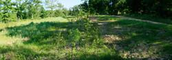 Hedge Summer