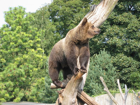 Recognizing real bears – and learning to not feed them