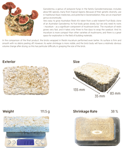 Mushroom is Magic: Mycelium Materials Growing Process & Performance Test