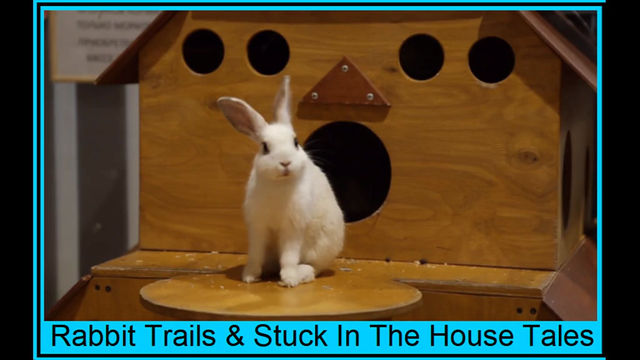 Rabbit Trails & Stuck At Home Tales (Video & Text)