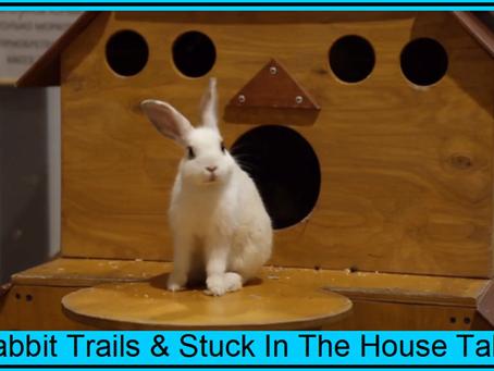 PART 2 - Rabbit Trails & Stuck At Home Tales (Text & Video)