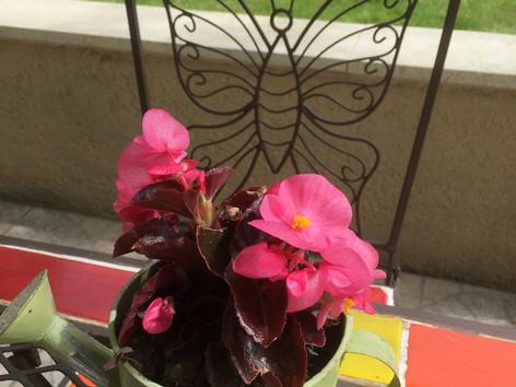 Terrasse fleurie Velleron.jpeg