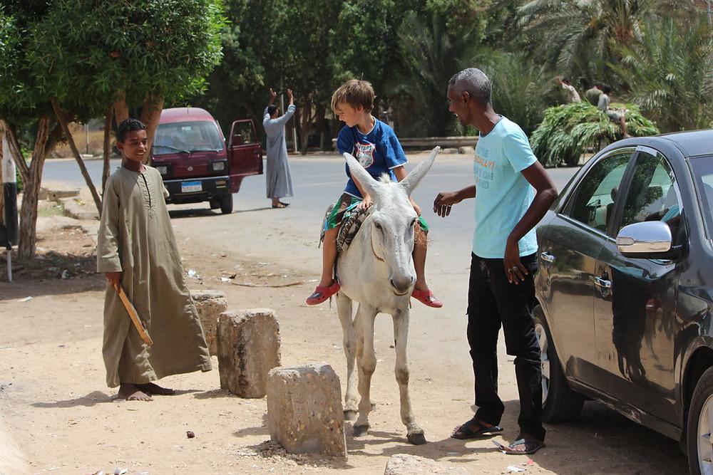 Egypt - Asuan - Edfu - venkov - jízda na oslíkovi