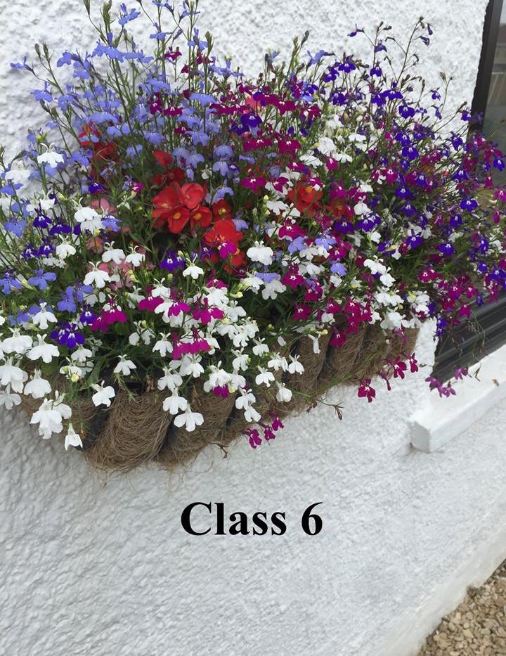 Nailsea Flower Show