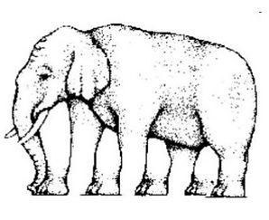 optical-illusions-6-638.jpg