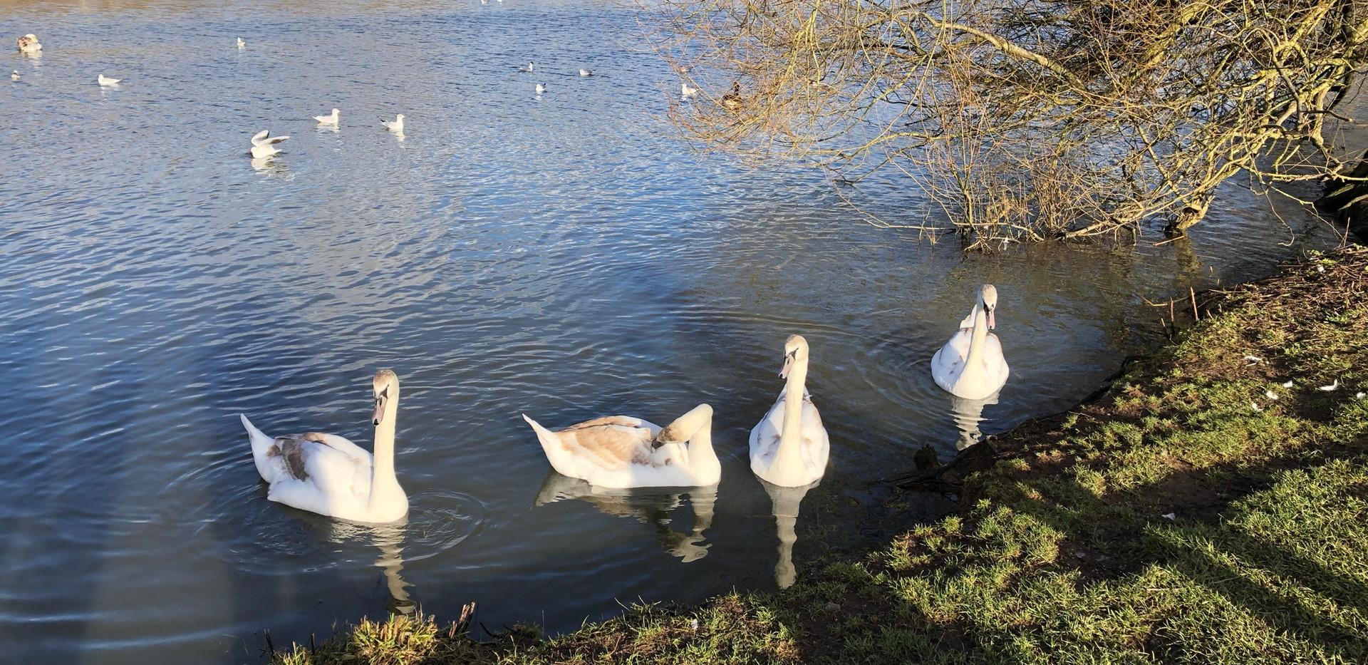 Backwell lake
