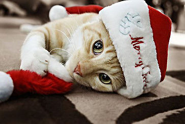 Christmas-Animals-002.jpg