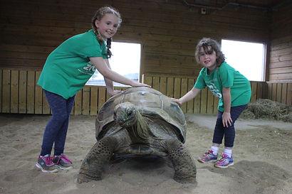 polly-tortoise.jpg