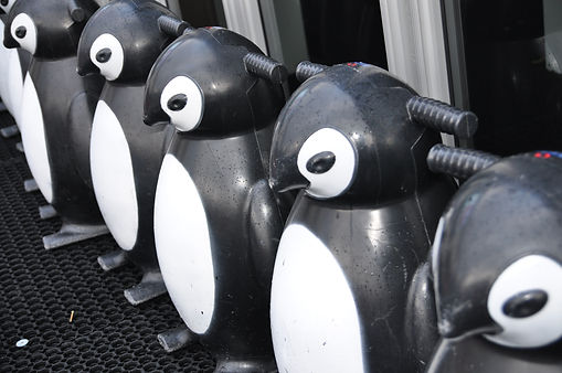 We The Curious Penguins_credit Masha Man