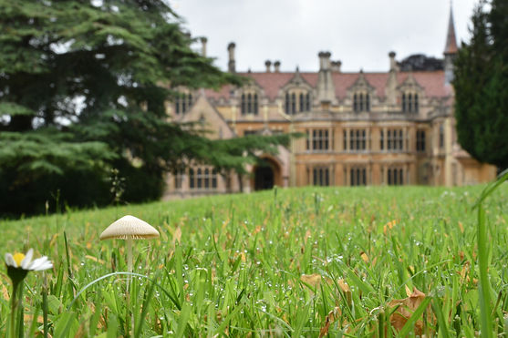 Anna Kilcooley_Tyntesfield_mushroom on l