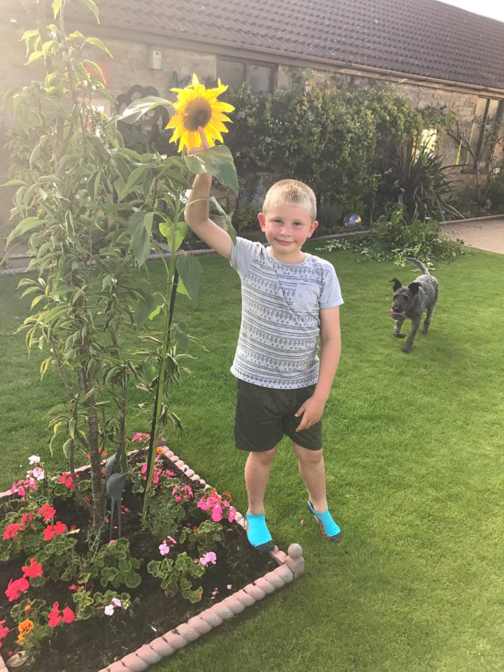 Jacob Davey Turner with his sunflowe