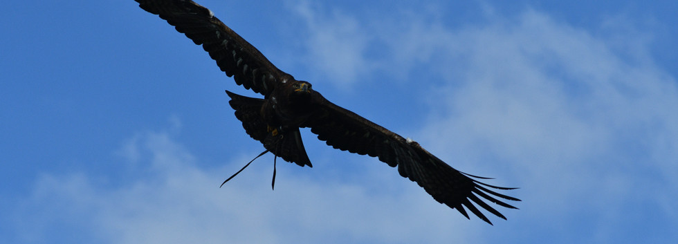 Eddie the Eagle at Noah's Ark