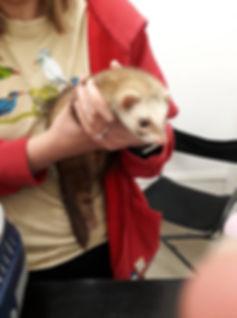 Found ferret.jpg