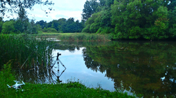 Backwell Lake July 2016