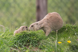 baby-prairie4.jpg