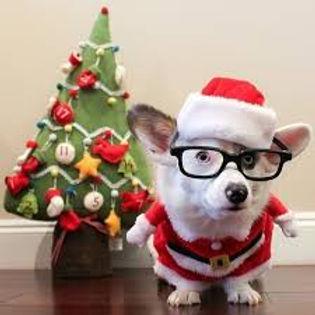 christmas animals.jpg