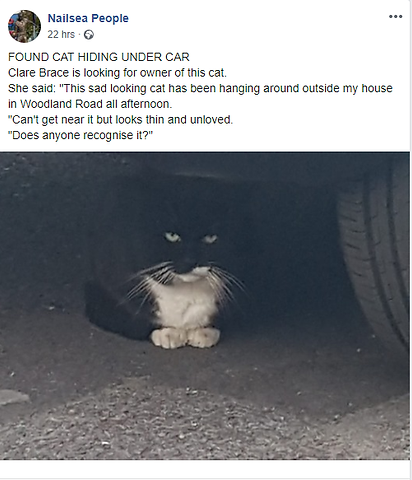 Found cat.png