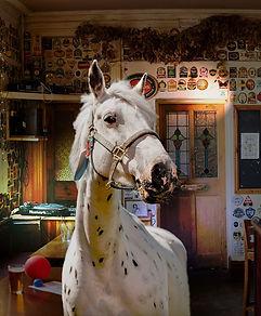 Horse play.jpg