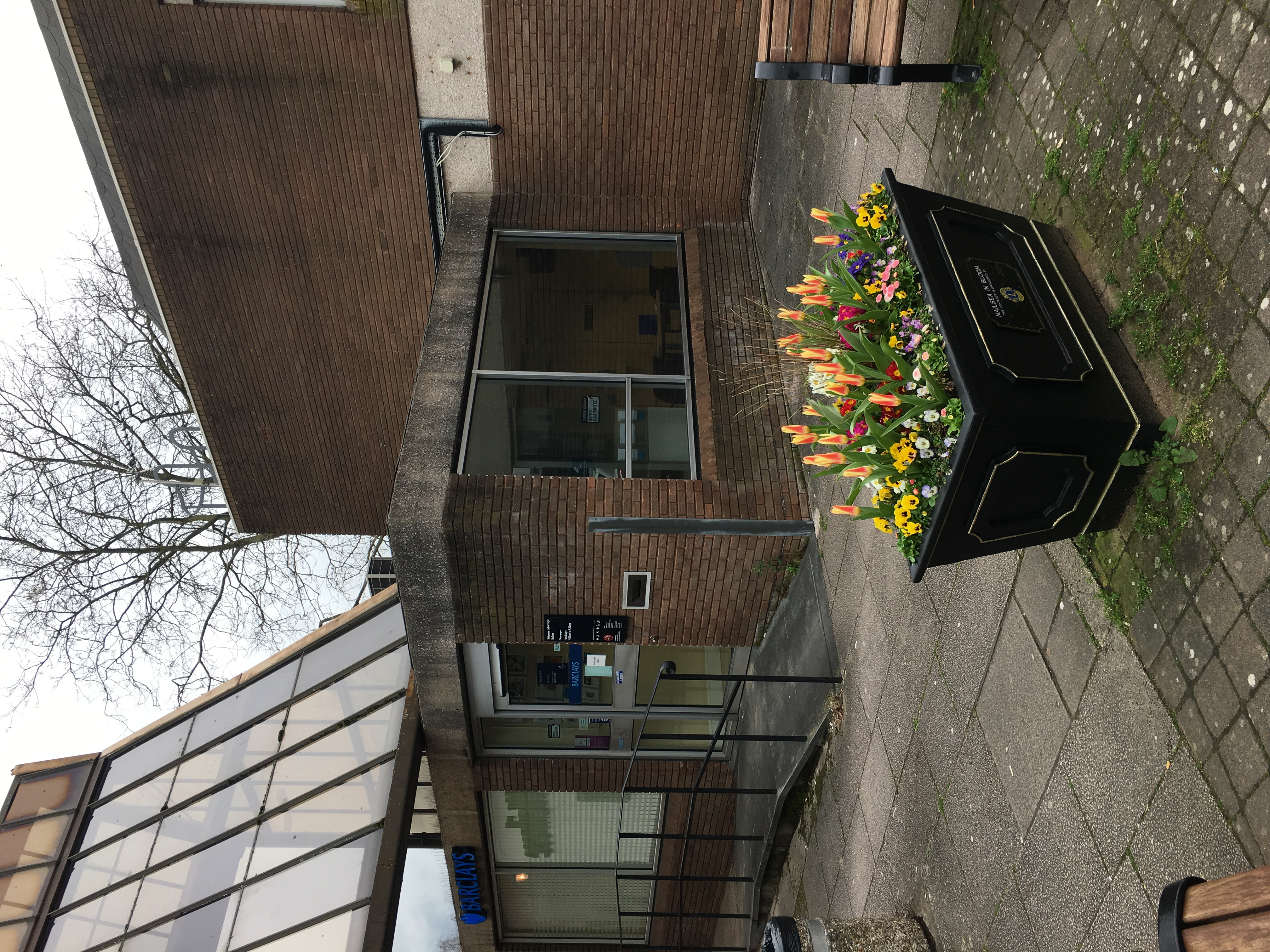 Daffodil Sunday March 2017