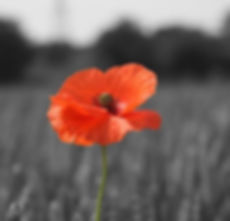 Poppy-appeal.jpg