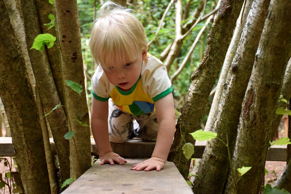 Boy crawling through coppice crossing at Leigh Woods 1 (c) National Trust-Alana Wright