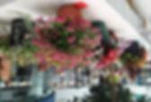 flower show 1a.jpg