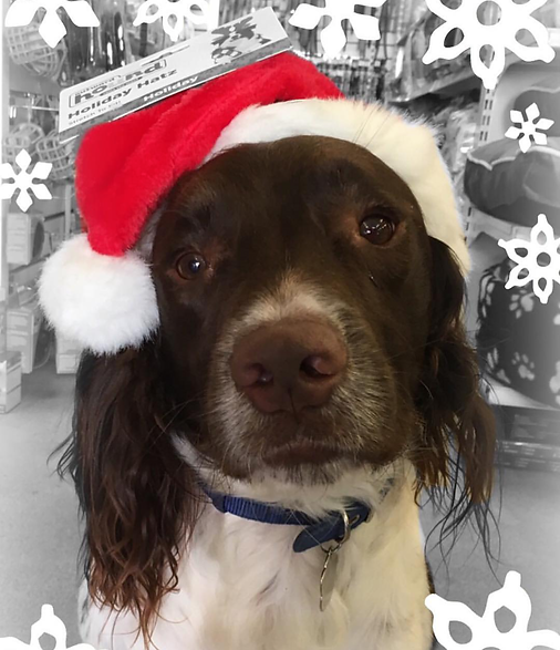 Aaron Pets stocking presents for pooches